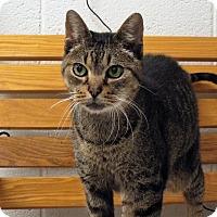 Adopt A Pet :: Momo - Shelby, MI