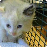 Adopt A Pet :: *TWEAK - Sacramento, CA