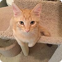 Adopt A Pet :: Hobbes - Prescott, AZ