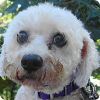 Adopt A Pet :: Trevor - St Louis, MO