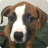 Adopt A Pet :: Beatrice - Columbia, SC
