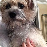 Adopt A Pet :: Mama - Encino, CA