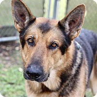 Adopt A Pet :: Bruno - Picayune, MS