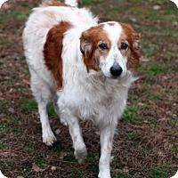 Adopt A Pet :: Barron - Saratoga, NY