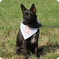 Adopt A Pet :: Nikki - Cameron, MO