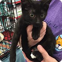 Adopt A Pet :: Olive - Richmond, VA