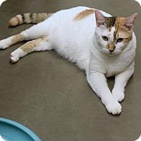 Adopt A Pet :: Jill - Las Vegas, NV