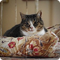 Adopt A Pet :: Lexus - Covington, KY