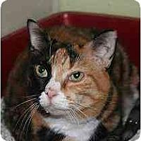 Adopt A Pet :: Sweetie - Marietta, GA