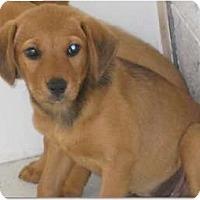 Adopt A Pet :: Olivia - Alexandria, VA