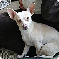 Adopt A Pet :: Sunny - Commerce City, CO