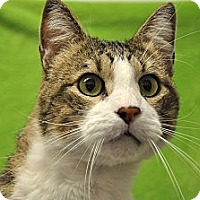 Adopt A Pet :: Max - Foothill Ranch, CA