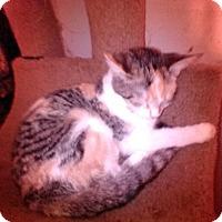Adopt A Pet :: Rosie - Fairborn, OH