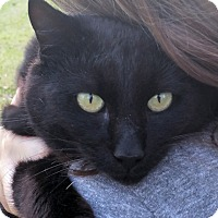 Adopt A Pet :: Ebenezer - Wilmington, NC
