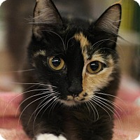 Adopt A Pet :: April - Sacramento, CA