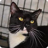 Adopt A Pet :: Oreo - Queens, NY