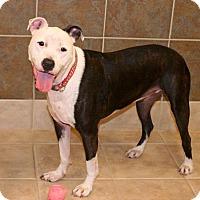 Adopt A Pet :: Delilah - Albany, NY