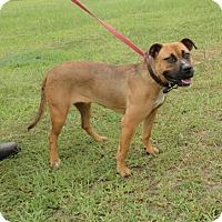 Adopt A Pet :: Maxi - Rockville, MD
