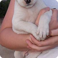 Adopt A Pet :: CLAIRE - Corona, CA