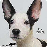 Adopt A Pet :: Kate - Baton Rouge, LA