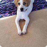 Adopt A Pet :: Jill - Millersville, MD