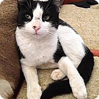 Adopt A Pet :: Gigi - Burbank, CA