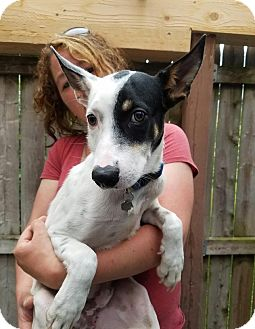 Terrier (Unknown Type, Medium) Mix Dog for adoption in Freeport, Maine - Noah (In Foster)