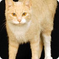 Adopt A Pet :: Atlantis - Newland, NC