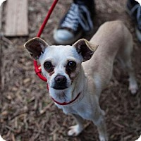 Adopt A Pet :: Pharah - Claremont - Chino Hills, CA
