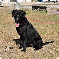 Adopt A Pet :: Zeus - Slidell, LA