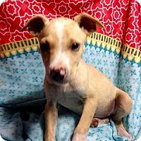Adopt A Pet :: ! 5 Candie - Colton, CA
