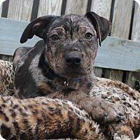 Adopt A Pet :: Will - Ocala, FL