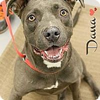 Adopt A Pet :: Dana - Phoenix, AZ