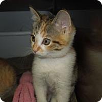 Adopt A Pet :: Savannah - Medina, OH