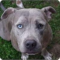 Adopt A Pet :: Ariel - Reisterstown, MD