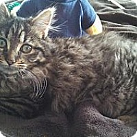 Adopt A Pet :: Fiona - Mount Clemens, MI