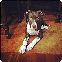 Adopt A Pet :: Montana - Clarksburg, MD
