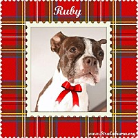 Adopt A Pet :: Ruby - Alabaster, AL