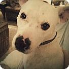 Adopt A Pet :: Knox