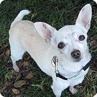 Adopt A Pet :: Posey - San Jose, CA