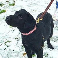 Adopt A Pet :: Coalie - Coppell, TX