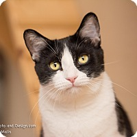 Adopt A Pet :: Ava - Fountain Hills, AZ