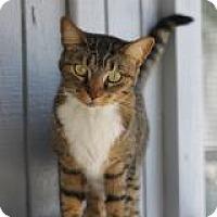 Adopt A Pet :: Bali - El Cajon, CA