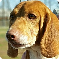 Adopt A Pet :: Hunter - Huntingburg, IN