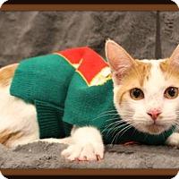 Adopt A Pet :: Kyley - Missouri City, TX