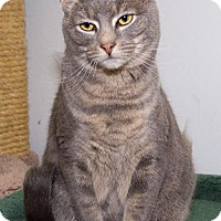 Adopt A Pet :: Harmony - Philadelphia, PA