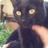 Adopt A Pet :: Fiona - Arlington/Ft Worth, TX