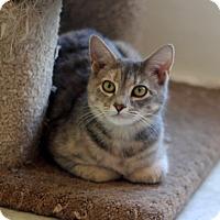 Adopt A Pet :: Muffey - Dalton, GA