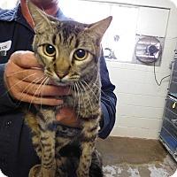 Adopt A Pet :: RICO - Houston, TX