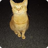 Adopt A Pet :: Jazzy - Florence, KY